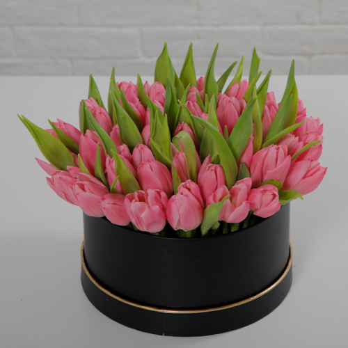 Pink Tulips Time    Blacktulipflowers.in